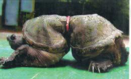 Sea-turtle-deformed_full
