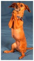 Begging_dog_309x172
